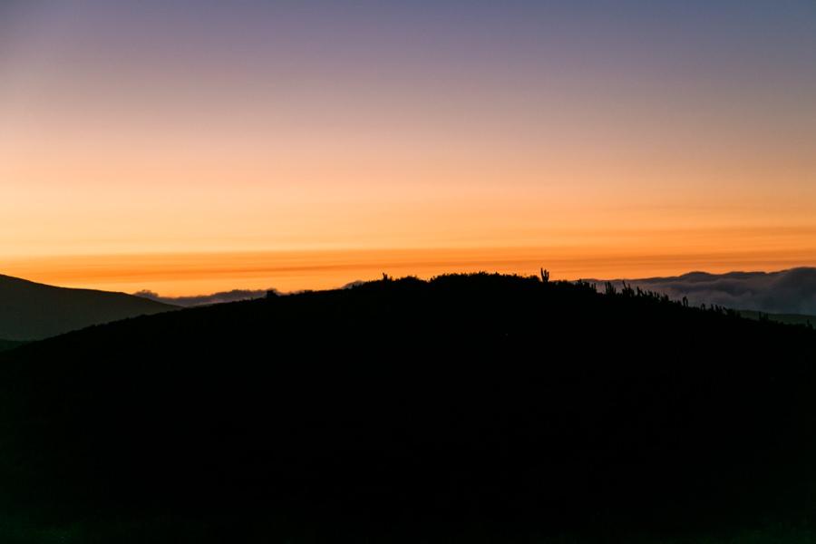 Fray Jorge National Park | Chile Reisebericht: Eine Rundreise mit dem Campervan durch Chile und Argentinien | Rolling Adventure | Stefanie Reindl Photography