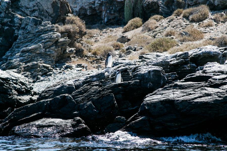 Reserva Nacional Pinguino de Humbold | Chile Reisebericht: Eine Rundreise mit dem Campervan durch Chile und Argentinien | Rolling Adventure | Stefanie Reindl Photography