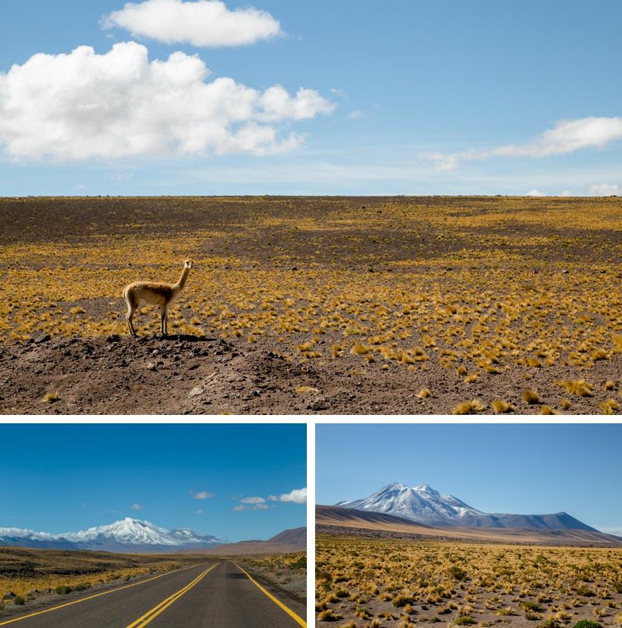 Altiplano in Chile | Chile Reisebericht: Eine Rundreise mit dem Campervan durch Chile und Argentinien | Rolling Adventure | Stefanie Reindl Photography