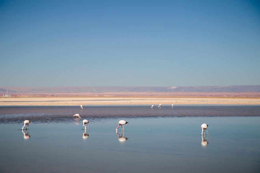 Laguna Chaxa | Chile Reisebericht: Eine Rundreise mit dem Campervan durch Chile und Argentinien | Rolling Adventure | Stefanie Reindl Photography