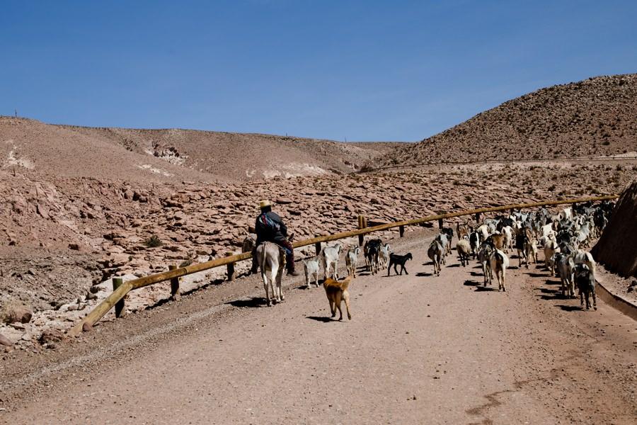 El Tatio | Chile Reisebericht: Eine Rundreise mit dem Campervan durch Chile und Argentinien | Rolling Adventure | Stefanie Reindl Photography