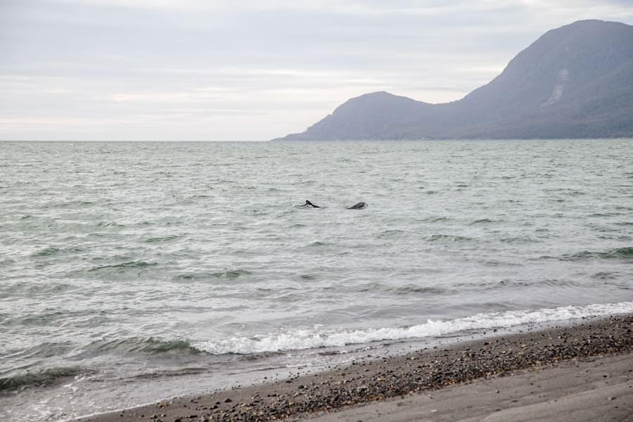 Raul Marin Balmaceda   Delfine beoabachten   Roadtrip Chile und Argentinien   Patagonien Reise   Rolling Adventure